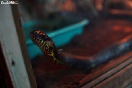 Węże (17)
