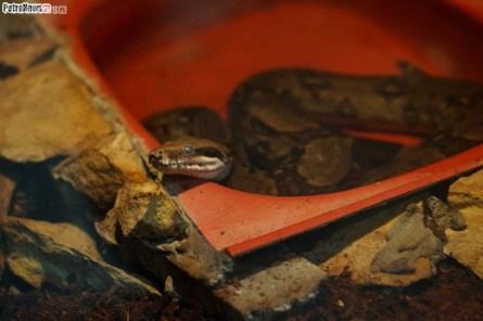 Węże (18)