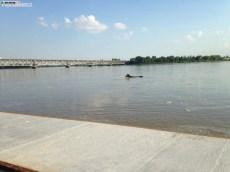 Rzeka Wisła (3)