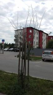 Drzewko 3