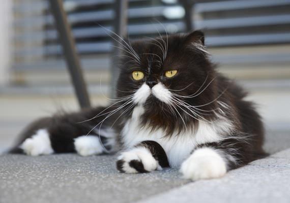 Fotografie černé kočičky rty