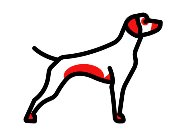 Можно ли дать диазолин собаке от аллергии — Аллергия и все о ней