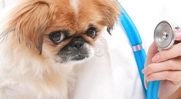 Можно ли активированный уголь собаке: дозировка, показания и противопоказания, советы ветеринаров