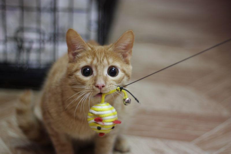 Permainan hewan peliharaan memungkinkan Anda untuk mengisinya kekurangan gerakan di apartemen
