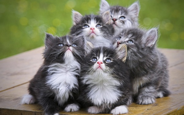 Το Pet προσδόκιμο ζωής εξαρτάται από τη γενετική και τη φροντίδα των υποδοχής