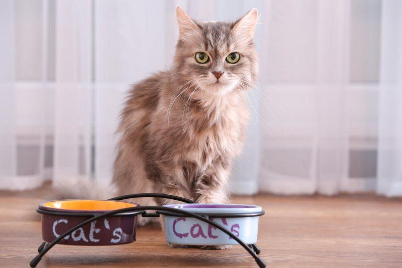 Banyak kucing dengan usia berubah preferensi