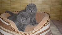 Примерный возраст кошки весом 2 6 кг. Возраст котёнка: разгадываем тайну