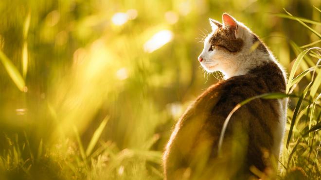 Что сделать чтобы кошка не линяла