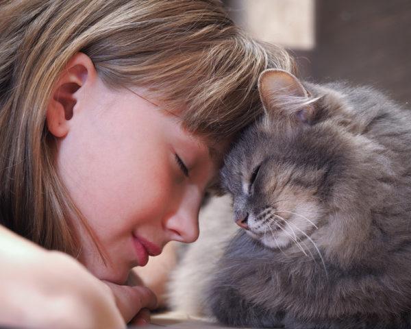 Инфекционный гепатит у кошек симптомы и лечение. Как в домашних условиях вылечить гепатит у кошек