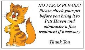 No Fleas Please