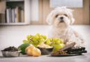 狗狗不能吃什麼?15 種千萬不能讓狗狗吃到的食物和水果!