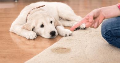 撒尿只是想討好你!?狗狗到處亂尿尿的原因以及防止方法大公開