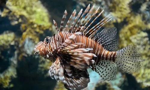 10 Fantastic Aquarium Fish For Every Budget