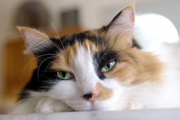 Готовимся к пополнению или сколько длится беременность у кошек. Сколько длится беременность у кошек Сколько вынашивает кошка котят времени месяцев