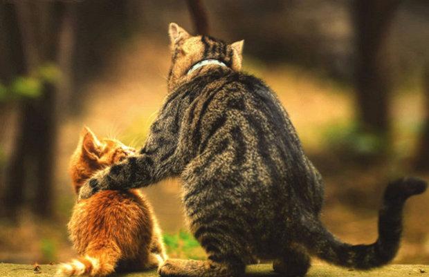 Как заставить кошек подружиться. Как подружить двух кошек в одной квартире, уживутся ли вместе