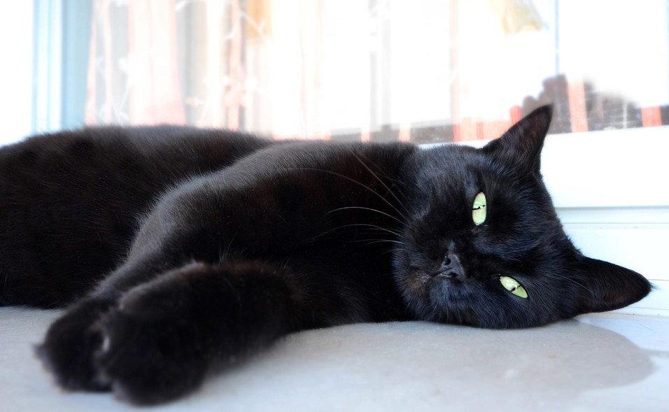 Čierna mačička zadok galérie