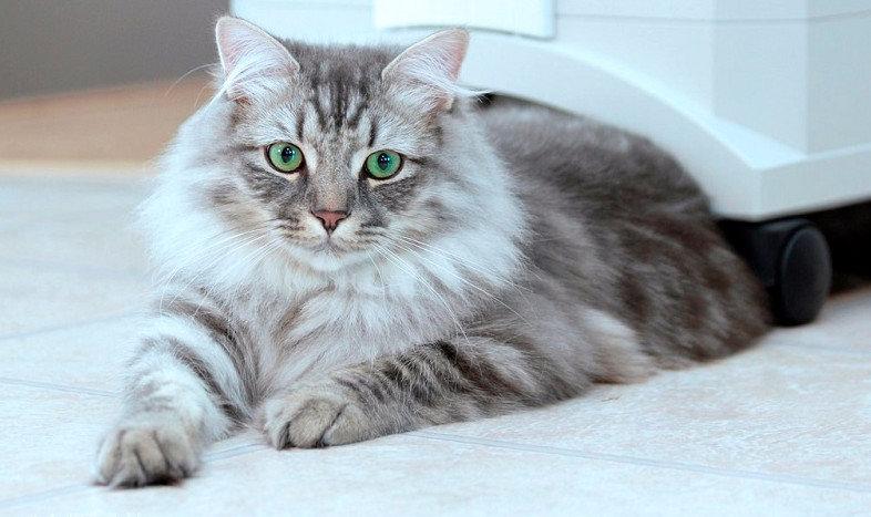 najväčšia mačička striekať