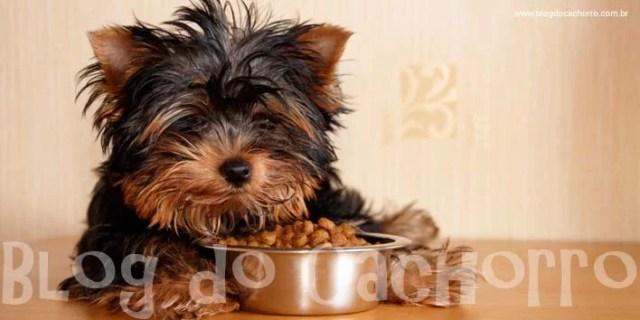 Seu cachorro está se recusando a comer ração? Você coloca a ração no prato e ele vira a cara?