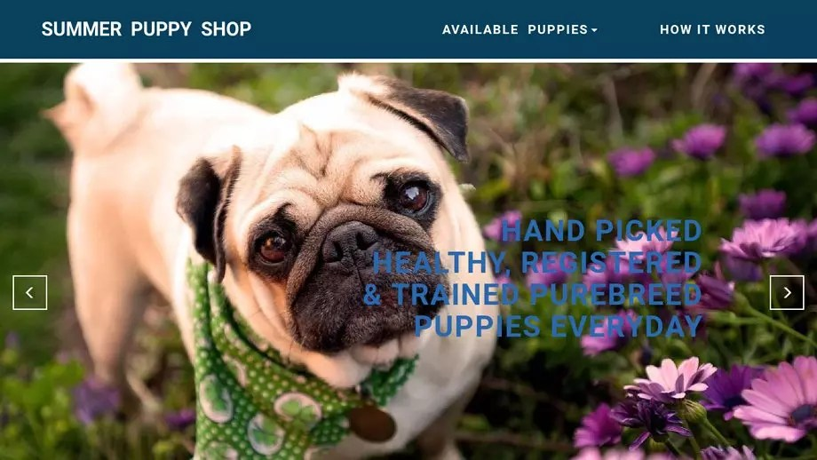 Pet Scam Website Summerpuppyshopcom - What is invoice number on receipt online pet store