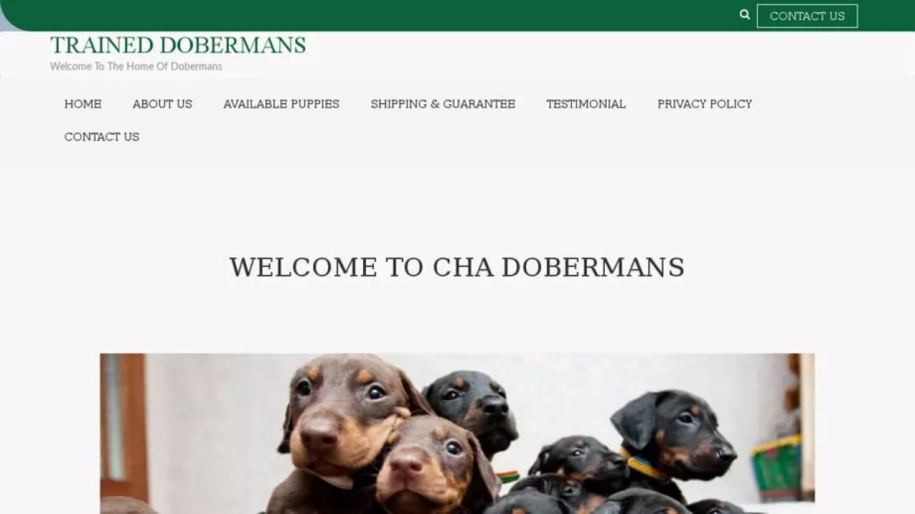 Puppy Scammer List Website: Trainedobermans com TRAINED