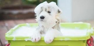 how often should you bathe a husky