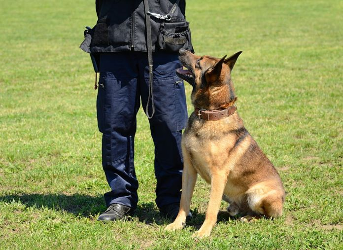 K9 police officer with his dog in training