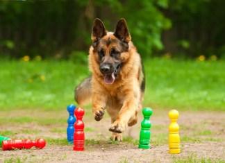 mind games for german shepherds