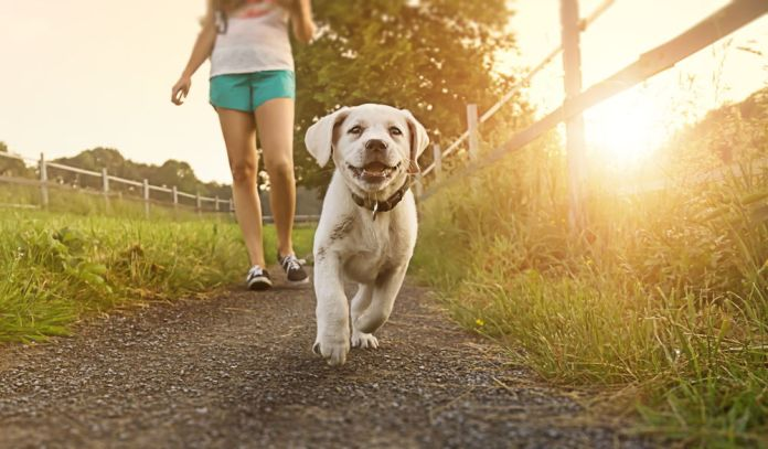 best time to feed dog before or after walk