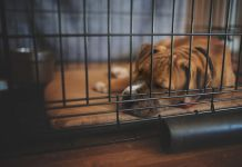 boxer puppy crate training