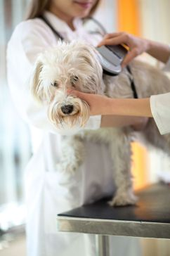 veterinarian checking microchip implant