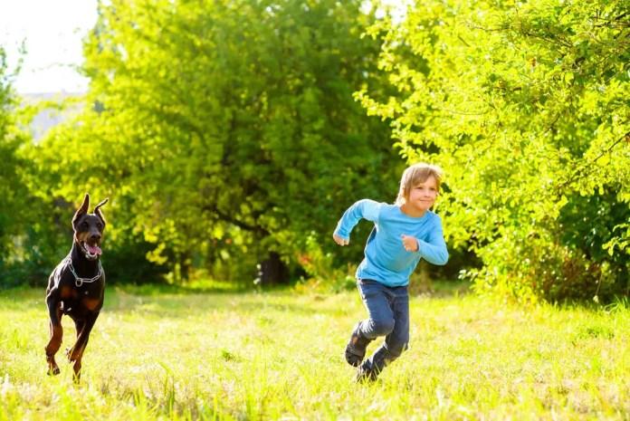 boy running away from dog or doberman