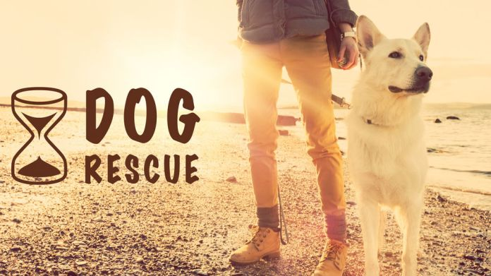 Training A Timid Rescue Dog