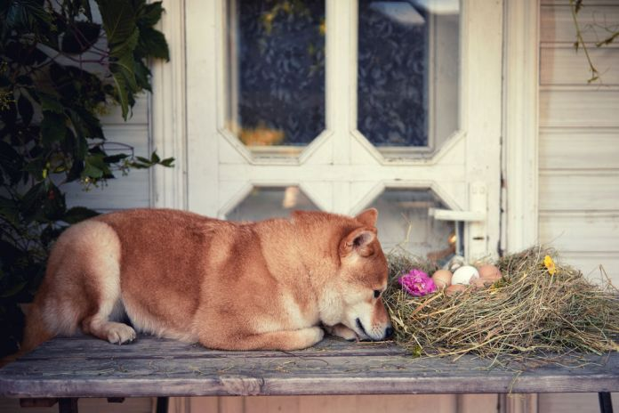 pregnant dog nesting behavior