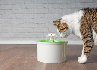 How Often Should I Change Water In Cat Water Fountain