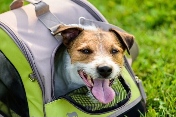 How To Choose The Right Pet Carrier For Your Dog