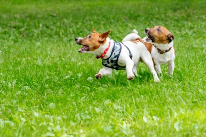 4 Essential Habits You Must Teach Your New Puppy