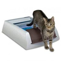 PetSafe ScoopFree Original Self-Cleaning Cat Litter Box Review