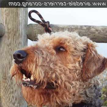 Airedale Terrier San Diego