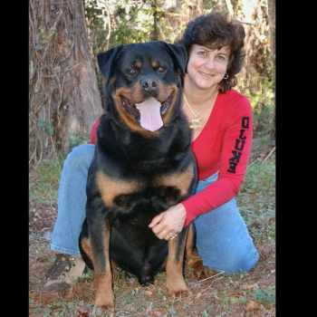 Akc Rottweiler For Sale