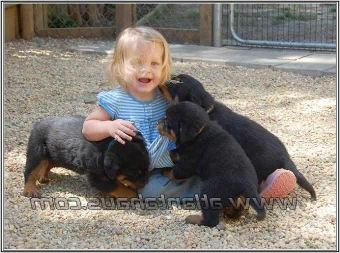 Alabama Rottweiler Breeders