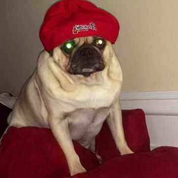 Atlanta Pug