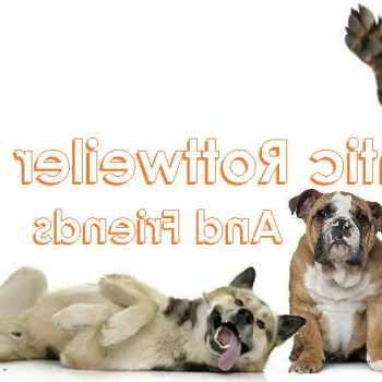 Atlantic Rottweiler Rescue Foundation