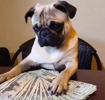 Average Cost Of A Pug