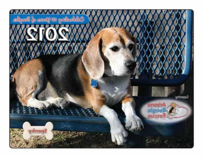 Az Beagle Rescue