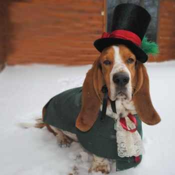 Basset Hound Dog Clothes
