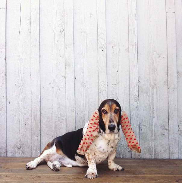 Basset Hound Ear Covers
