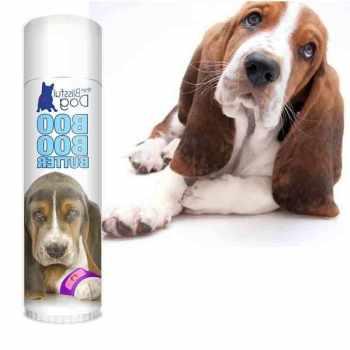 Basset Hound Itchy Skin