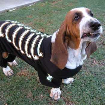 Basset Hound Rescue Los Angeles