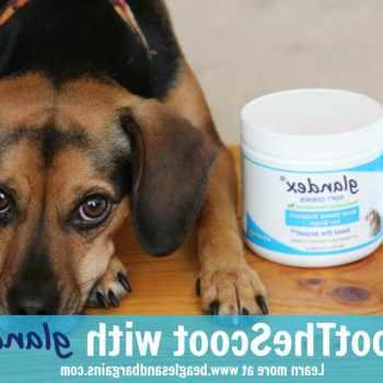 Beagle Anal Glands