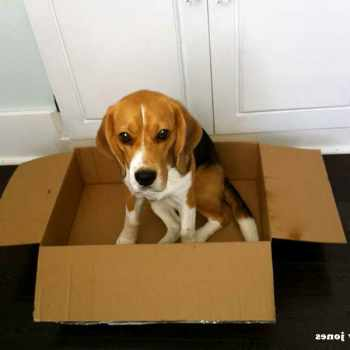 Beagle Box